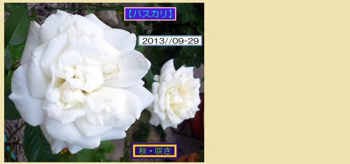 HT929【パスカリ】