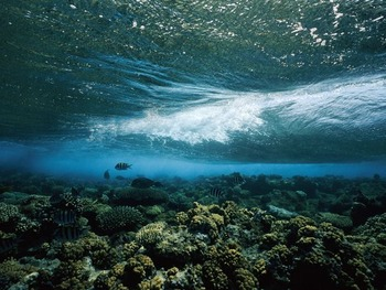 wave-reef-caloyianis_18452_600x450