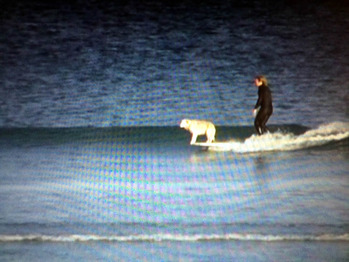 surfdog2