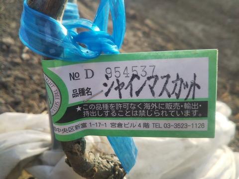 DSC_0083_copy_1305x979