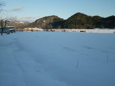 正月のブドウ園