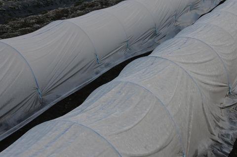 霜トンネル