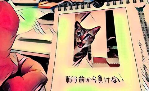 IMG-PHOTO-ART--555353072
