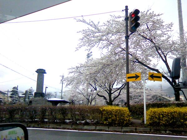 """桜or雪"""""""