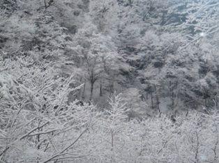 4月入り雪模様