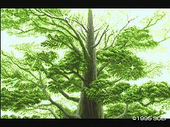 トヨーケの森2