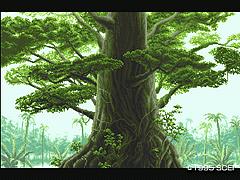 トヨーケの森1
