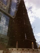 昼のツリー