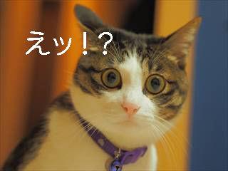びっくり-猫