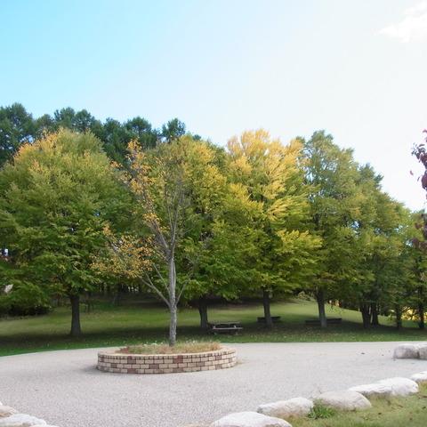 アルプス公園の秋