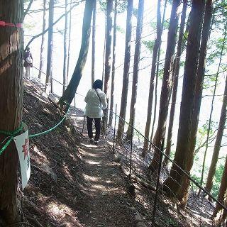 林の小道を抜けていくと