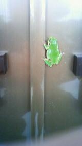 本社の玄関ドアとカエル