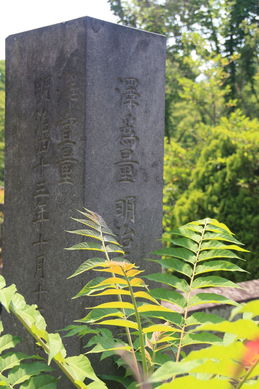 1546 澤為量墓(豊島区南池袋4-25...