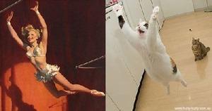 kucing (21)