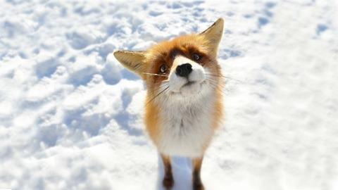 s_foxx