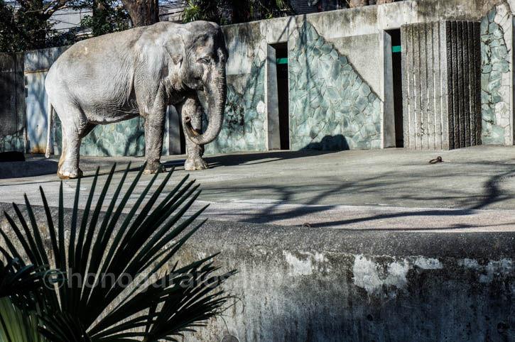 動物園 井の頭 Tokyo Zoo