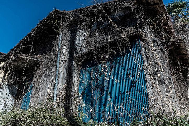 深大寺裏の廃屋-5