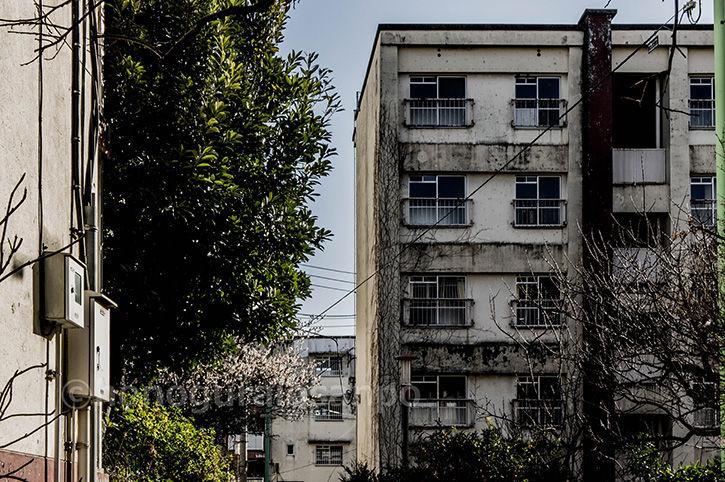 霞ケ丘団地 建物群
