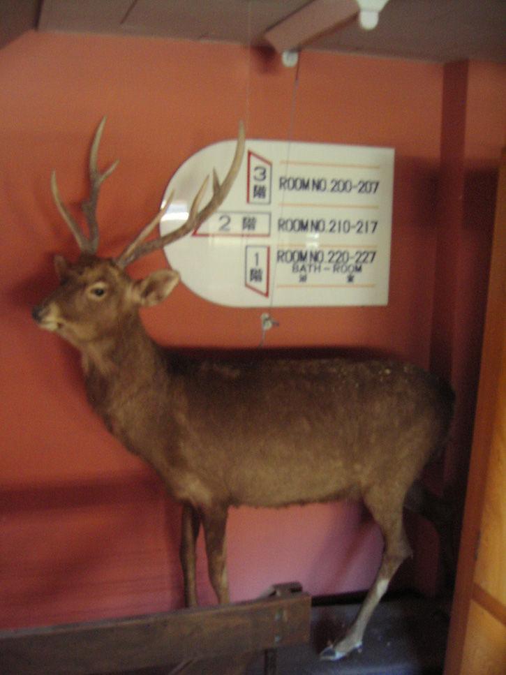 第一滝本館 横鹿