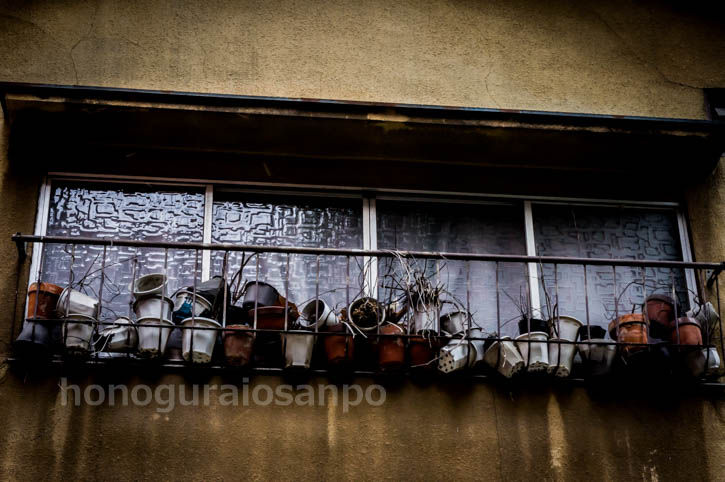 エリア8ビル 窓の植木