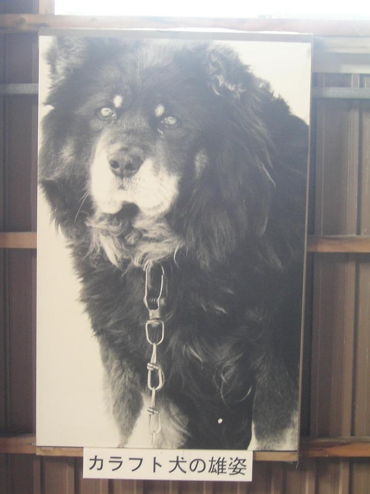カラフト犬