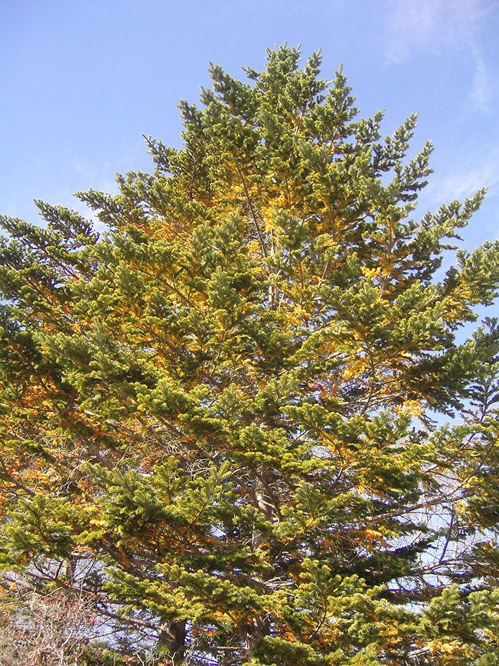 第一滝本館 木