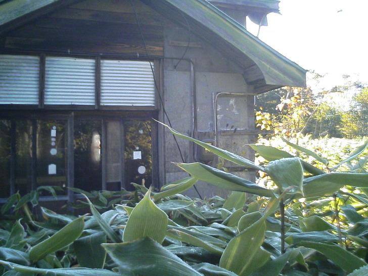 草木廃屋前面