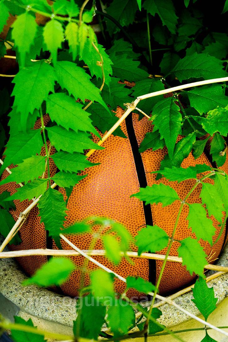 土気の物件 ドッジボール