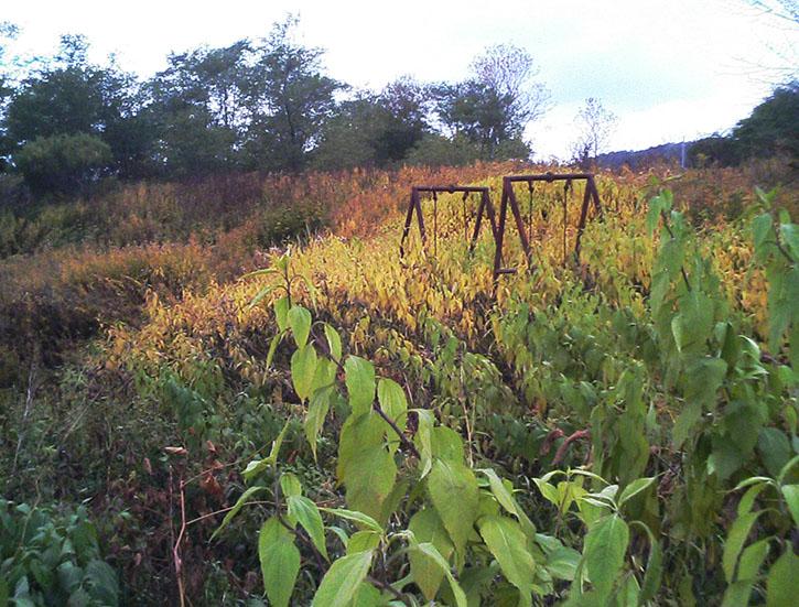 幸福の黄色いハンカチ ブランコ