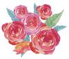 rose_img2