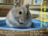 アイドルデビュー!