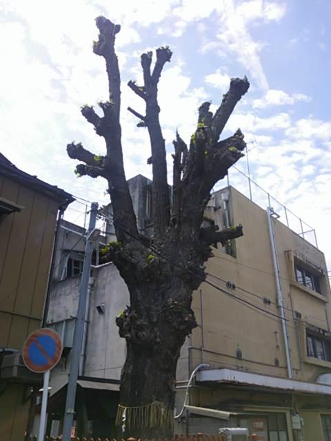 shimabarasumiyosi (2)