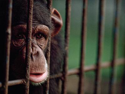 science-study-animal-depression_59860_big