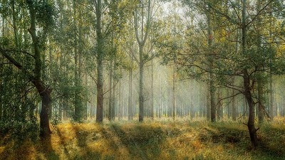 forest-1072828_640