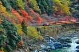 紅葉の保津峡を行くトロッコ列車2