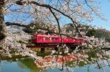 桜と「おもちゃ電車」