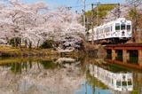 桜と「たま電車」