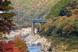 紅葉の大歩危峡と2000系