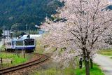 のと鉄道の桜