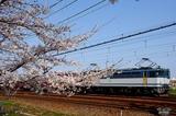 桜とEF65PF