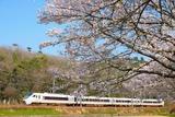 桜と289系
