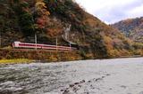 紅葉の井倉峡を行く381系