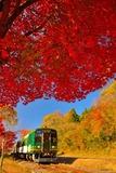 紅葉の信楽鐵道