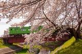 佐保川の桜と103系