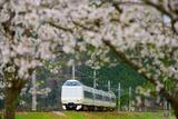 桜と287系
