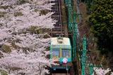 桜とケーブルカー
