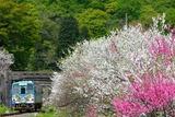 花桃とキハ120_1
