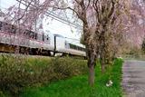 枝垂れ桜と287系