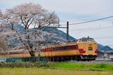 谷川の一本桜と183系