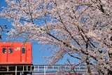 桜と201系